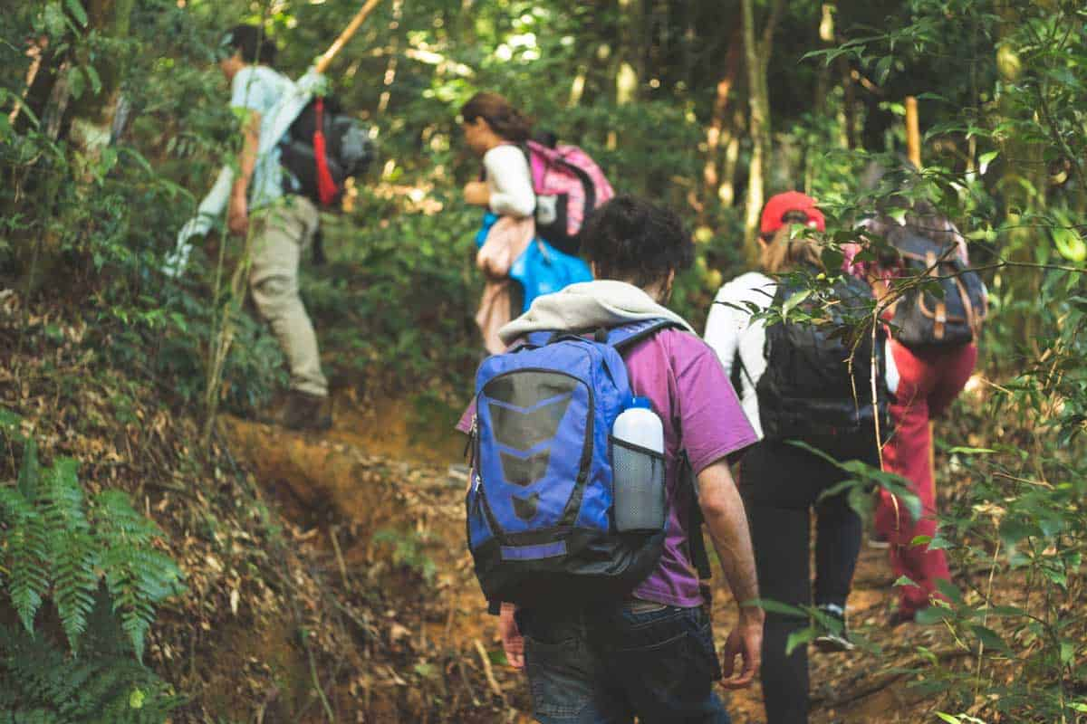 Group of hikers exploring the rainforest