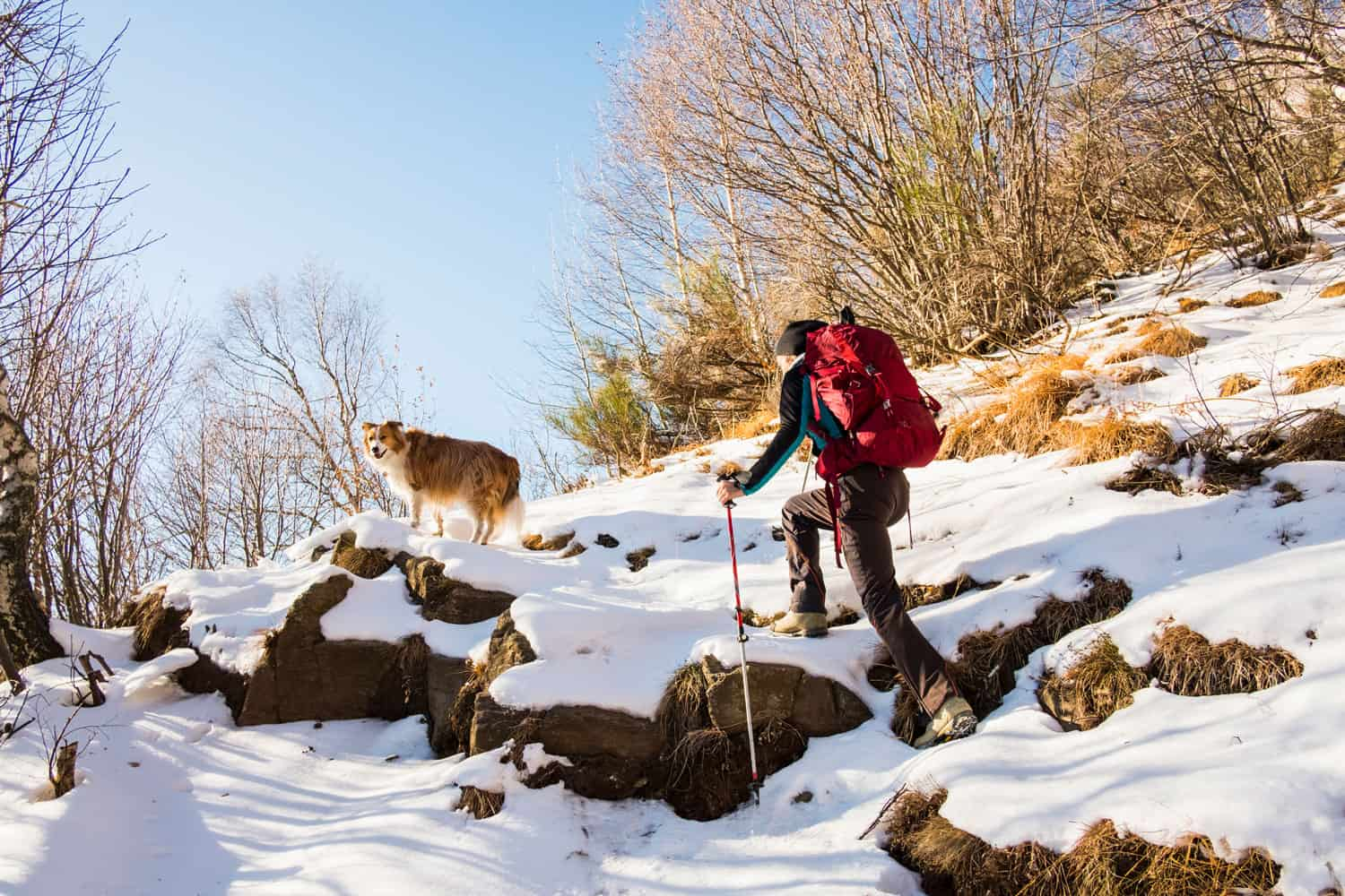 A fully geared hiker hiking a snowy mountain along with his dog