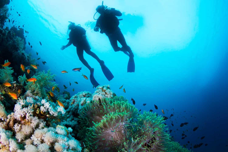 Two scuba divers exploring the deep corals of the ocean