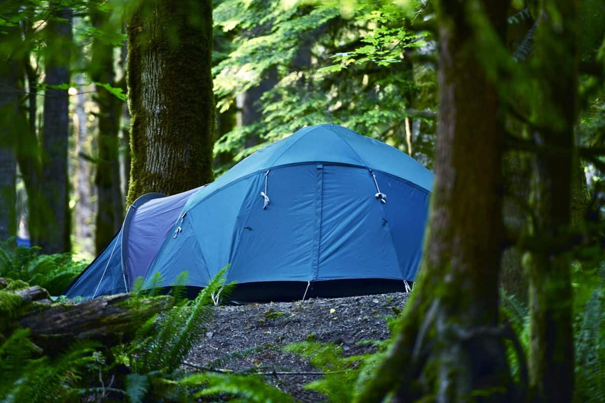 A huge multi person tent deployed in the middle of the forest
